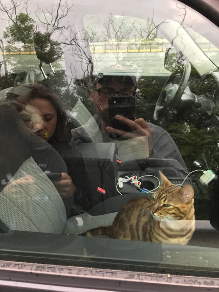 kitty locks couple out in car
