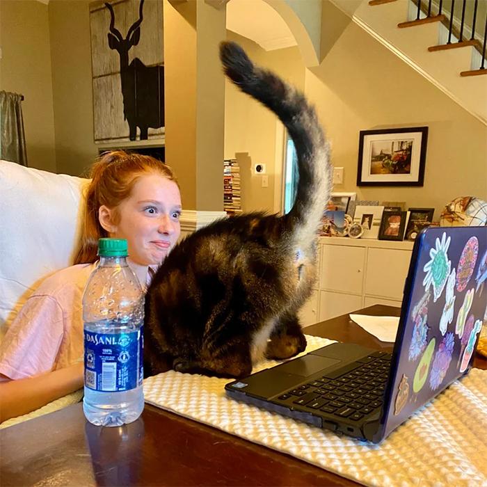 kitty shows butt during virtual class
