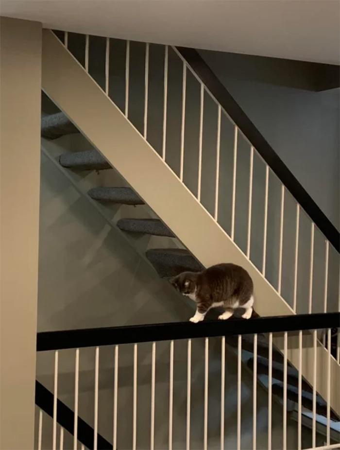 kitty walking on ledge