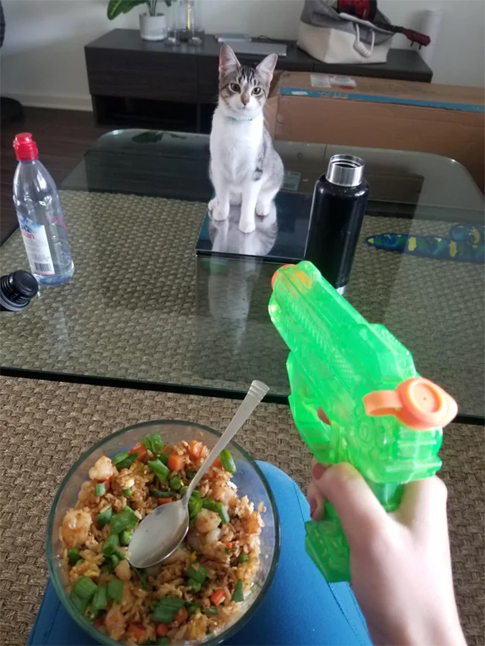 kitty with no fear threatened with plastic gun