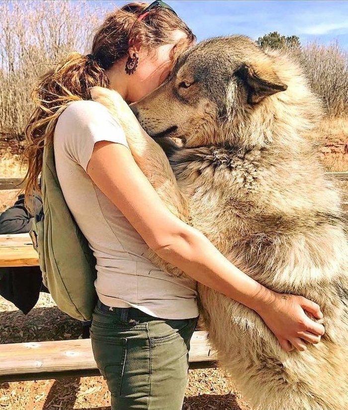 lady hugging a wolfdog