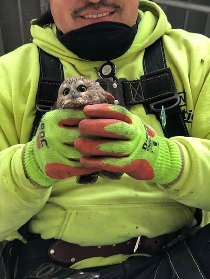 man holding an owl rescued from rockefeller christmas tree