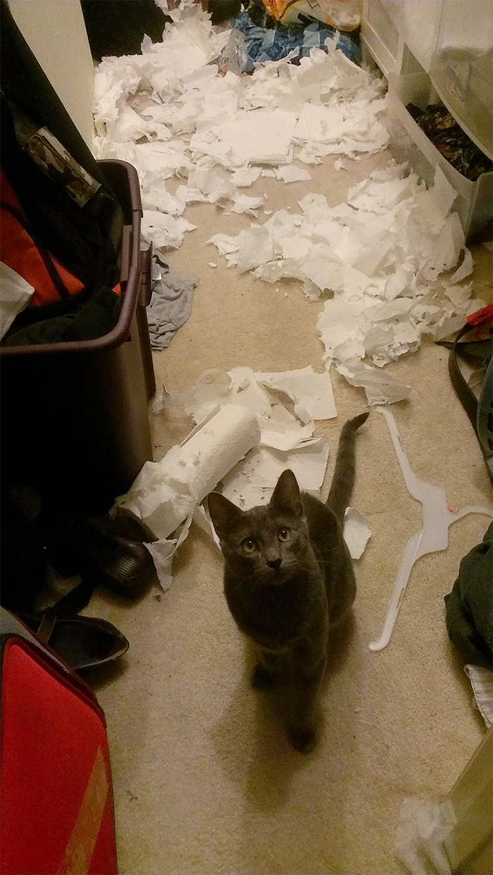 naughty pets cat shreds toilet papers