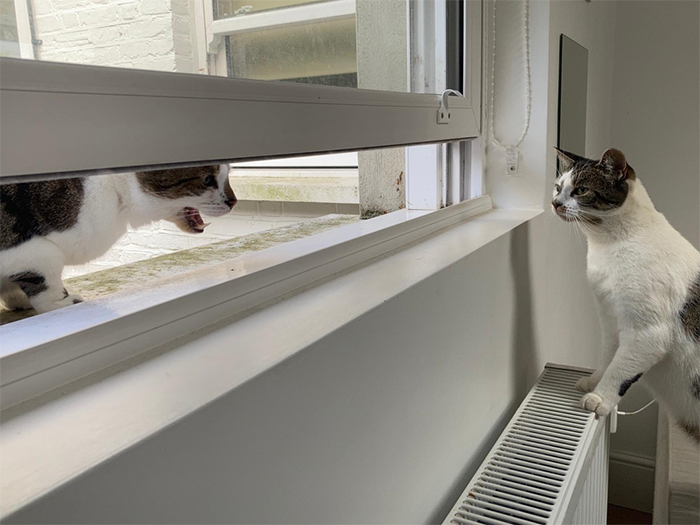 neighbor kitty pays a visit