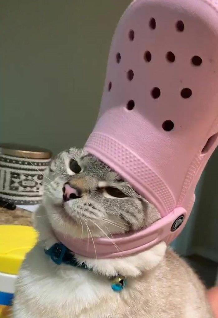 pet cat wearing a pink croc hat
