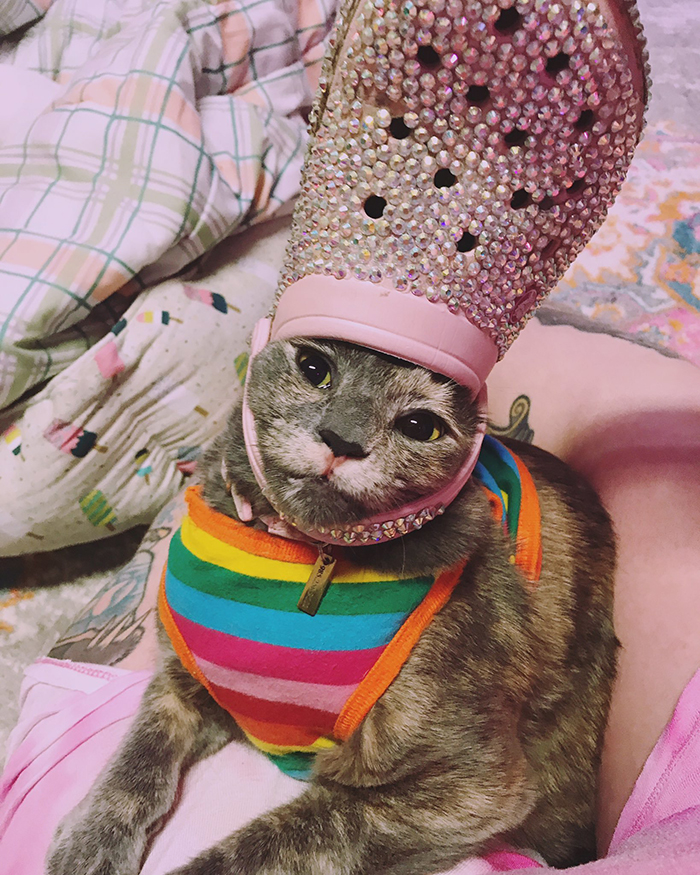 pet with a pink beaded croc on head