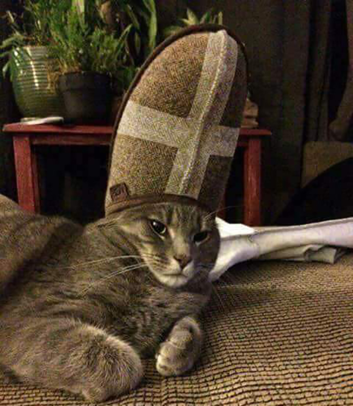 pet cat with a slipper on head