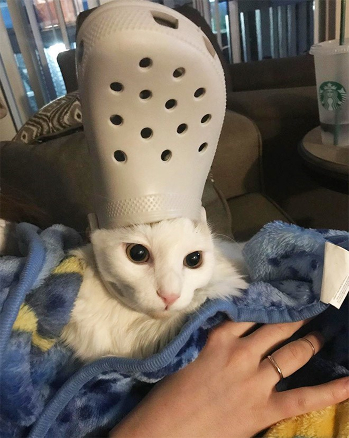 pet with a white croc hat