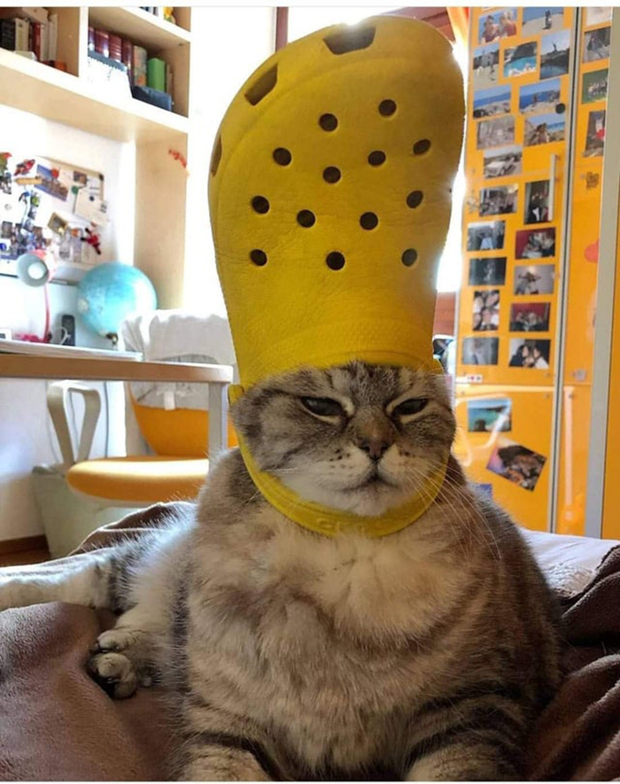 pet with a yellow croc on head