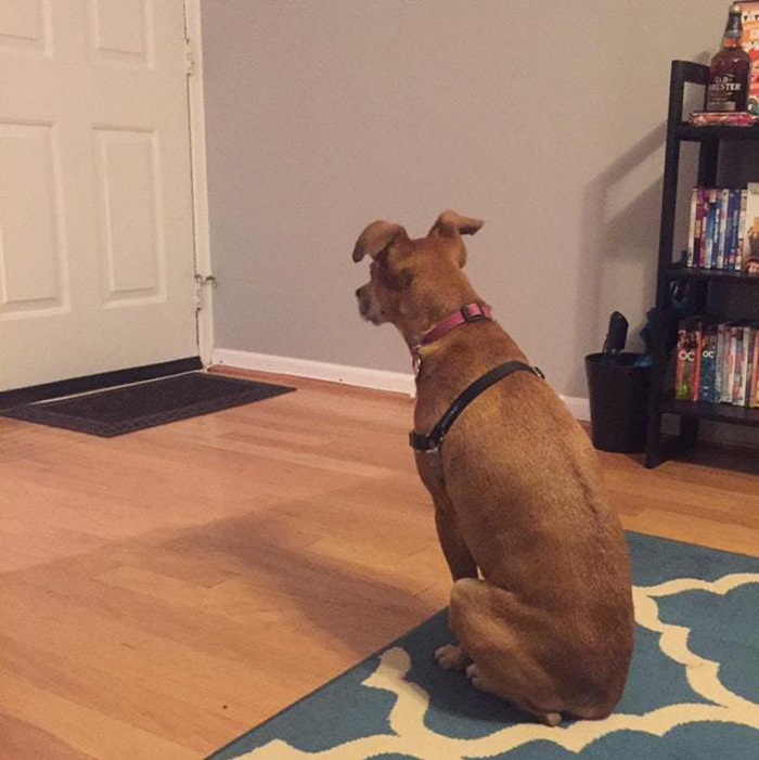 pooch waiting for owner to come home