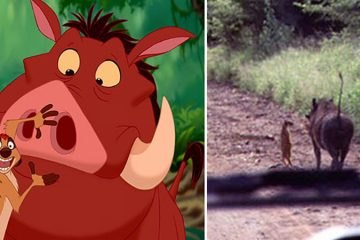 real Disney animals