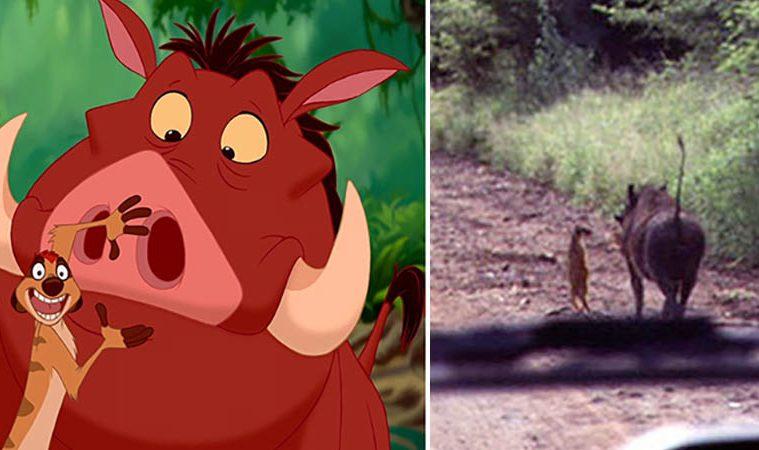 real Disney animals