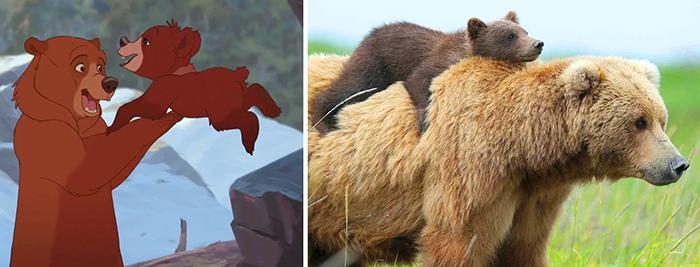 real life disney brother bear