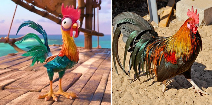 real life hei hei moana rooster