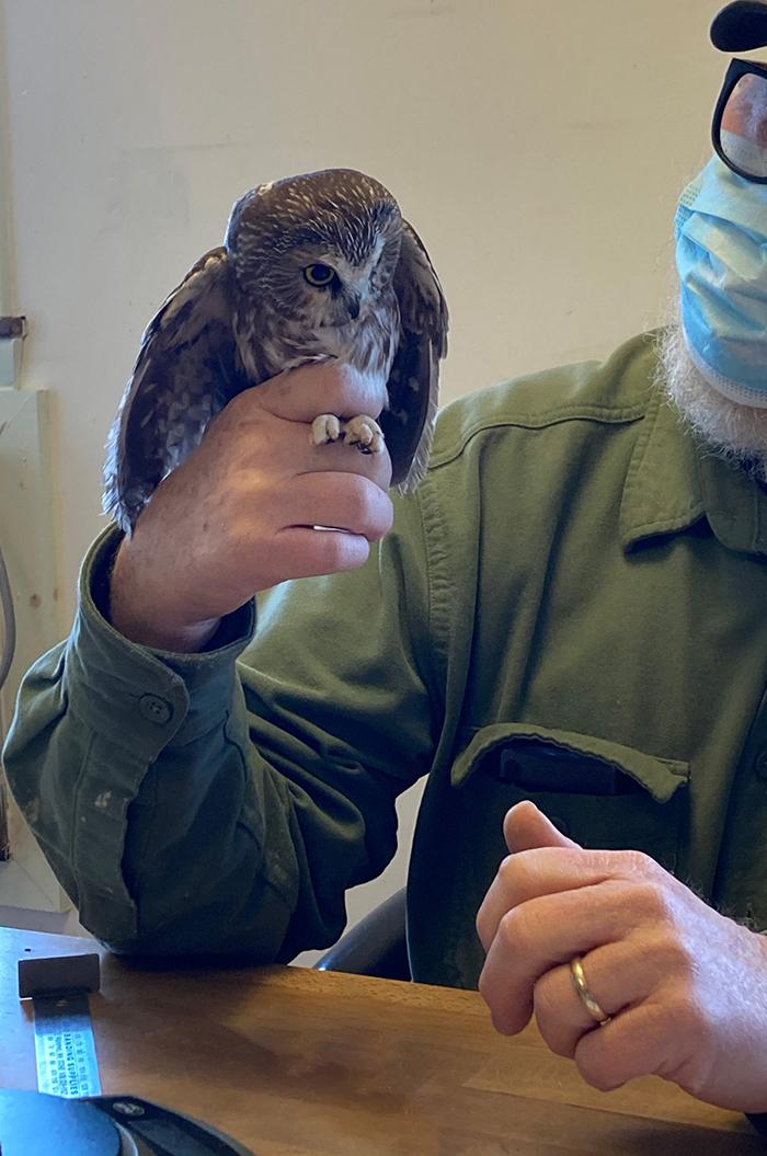 rescued nocturnal bird taken in by ravensbeard wildlife center