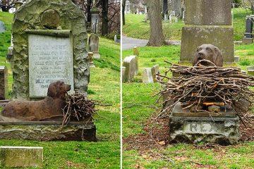sticks on dogs grave