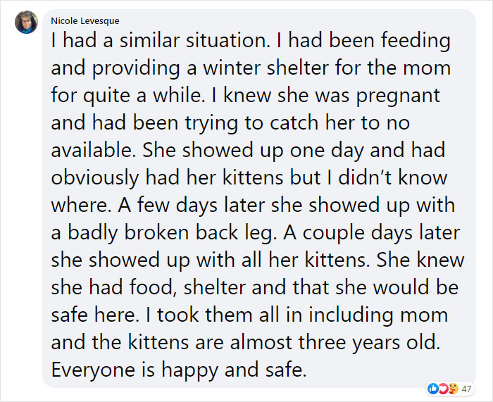 stray cat brings in kittens comment nicole