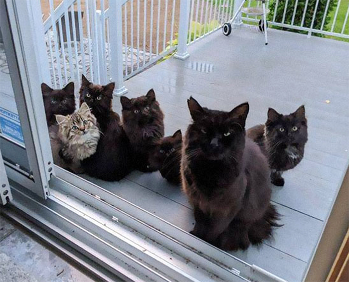 stray cat brings in kittens one by one