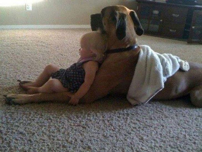 toddler leaning on a dog