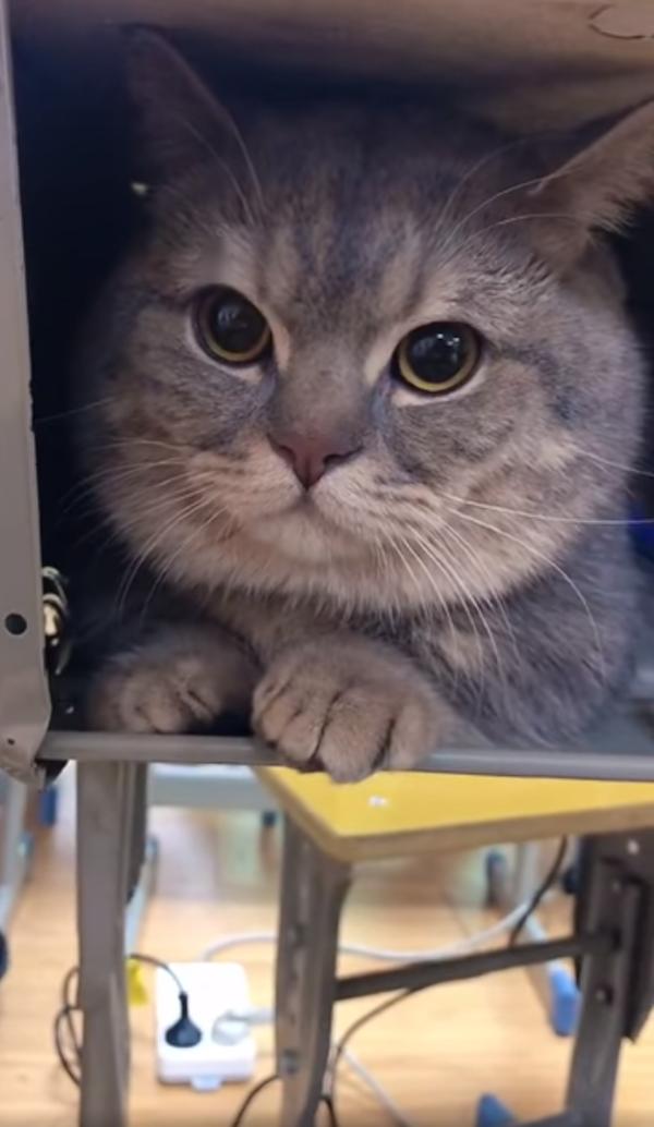 Ba Dun quietly hides under his owner's desk