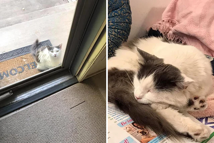 abandoned cats before and after adoption