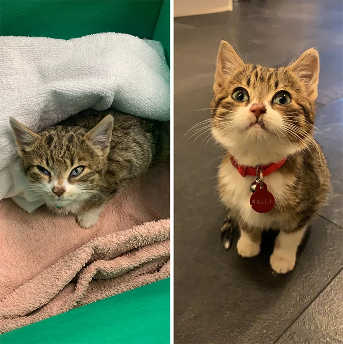 abandoned kitten rescued then and now