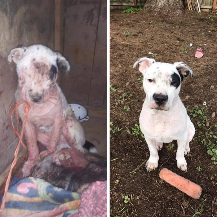 abandoned pup rescued transformation