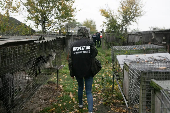activists investigate fur farm cruelty