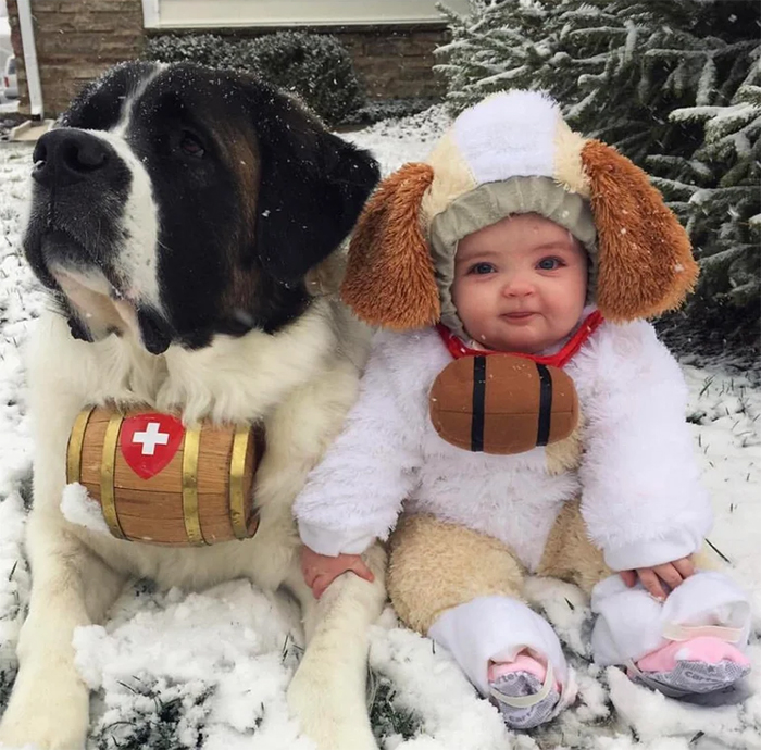 baby girl and saint bernard in the snow