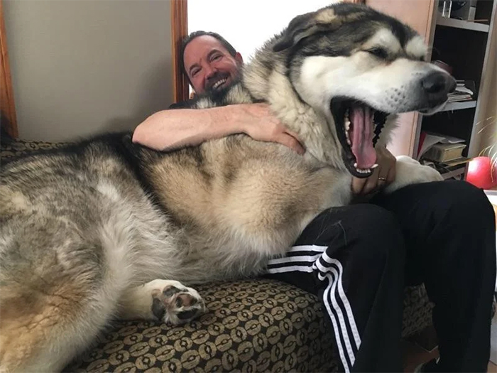 beastly canine with owner