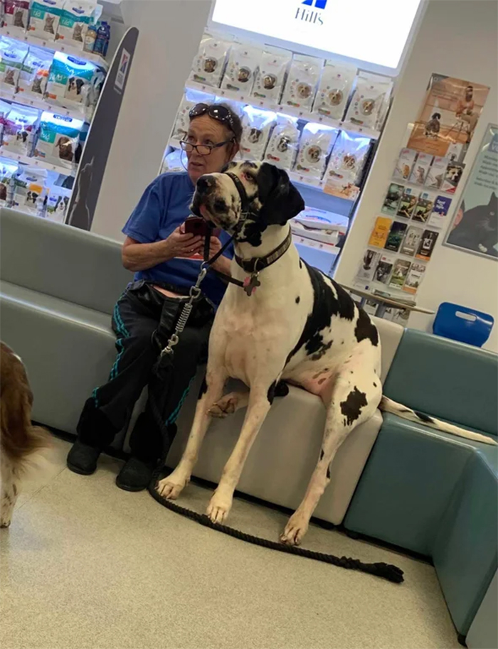 big dogs at the vet