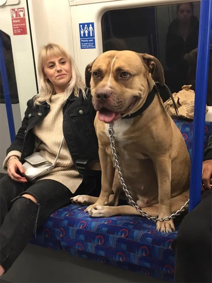 big dogs in the train