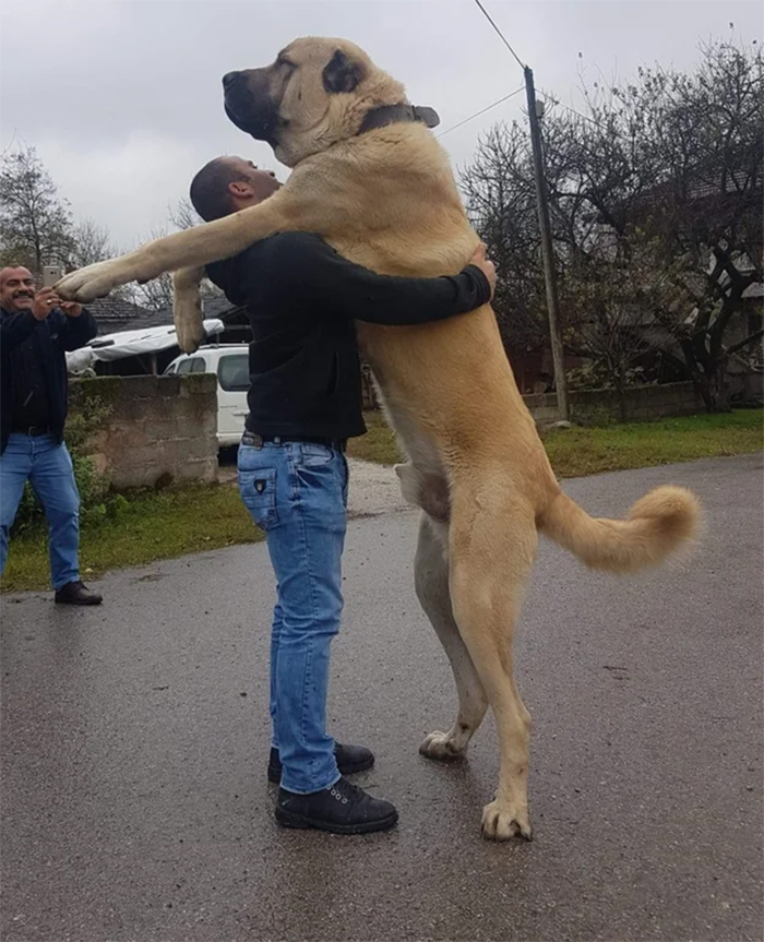 big dogs love some hugs