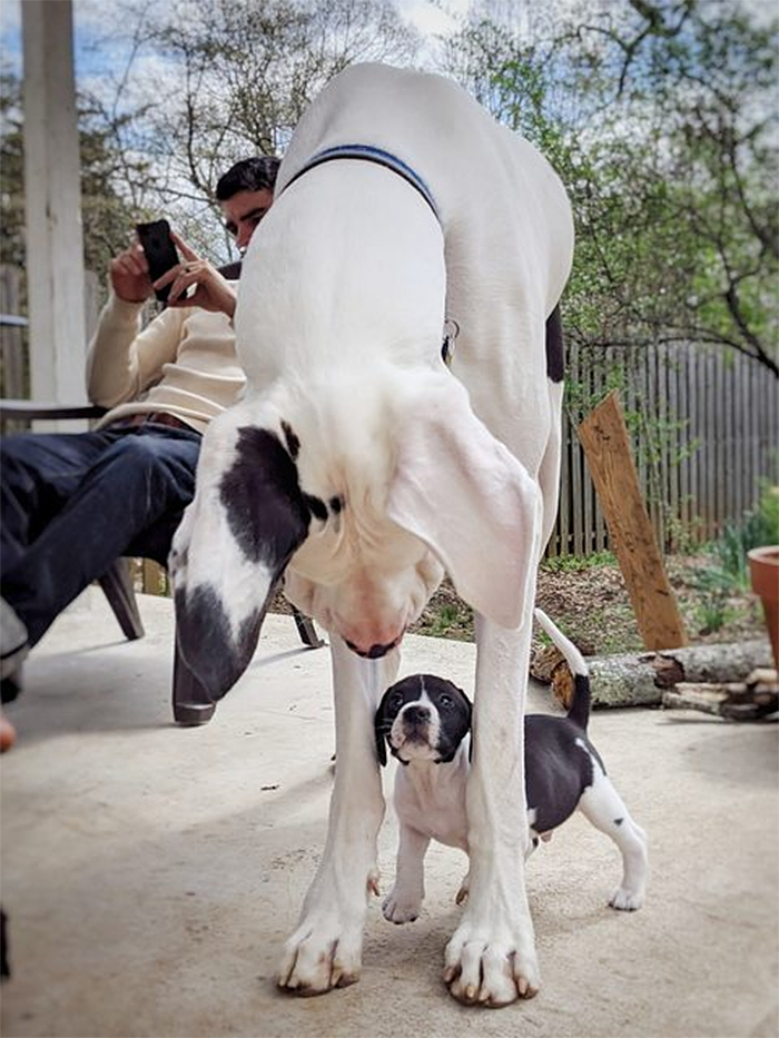 big dogs next to small dogs