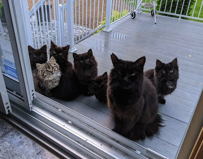 black mother cat with black kittens and a tabby kitten rescue pet photos