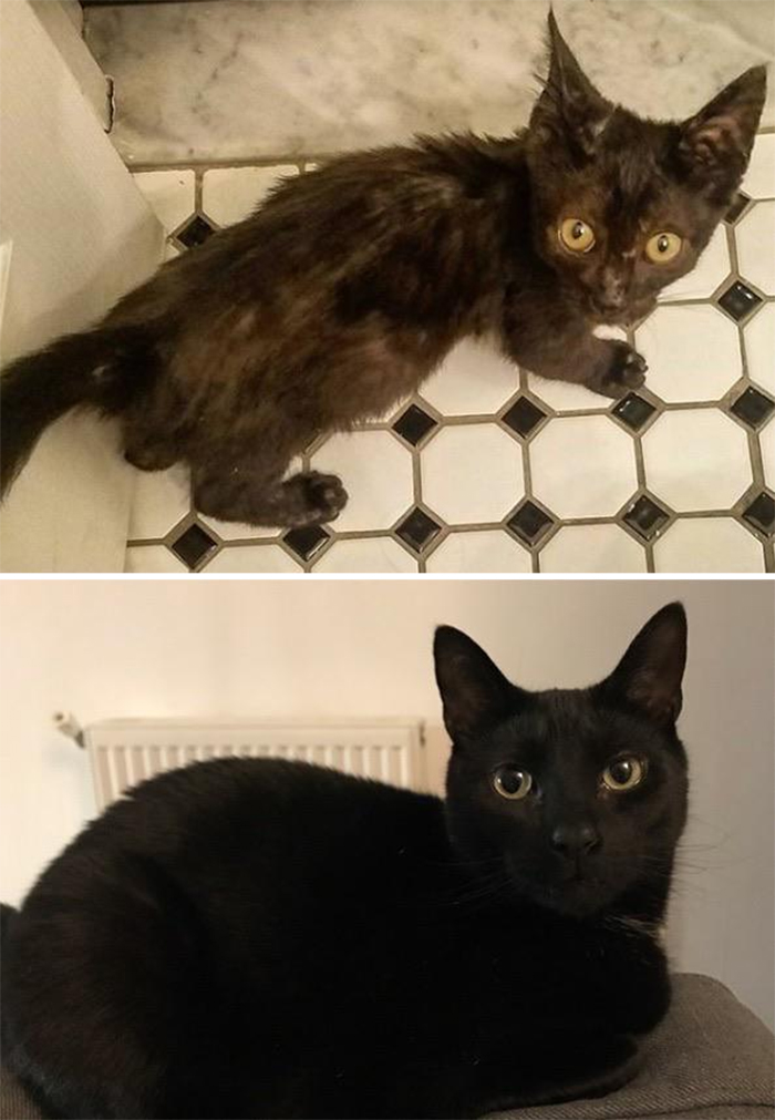 black rescue kitty then and now