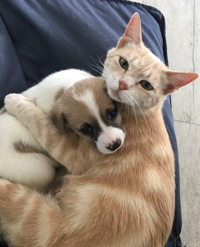 cat hugging adopted puppy rescue pet photos