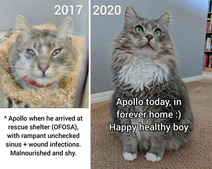 cats before and after adoption photos