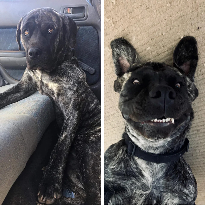 foster dog photos before and after adoption