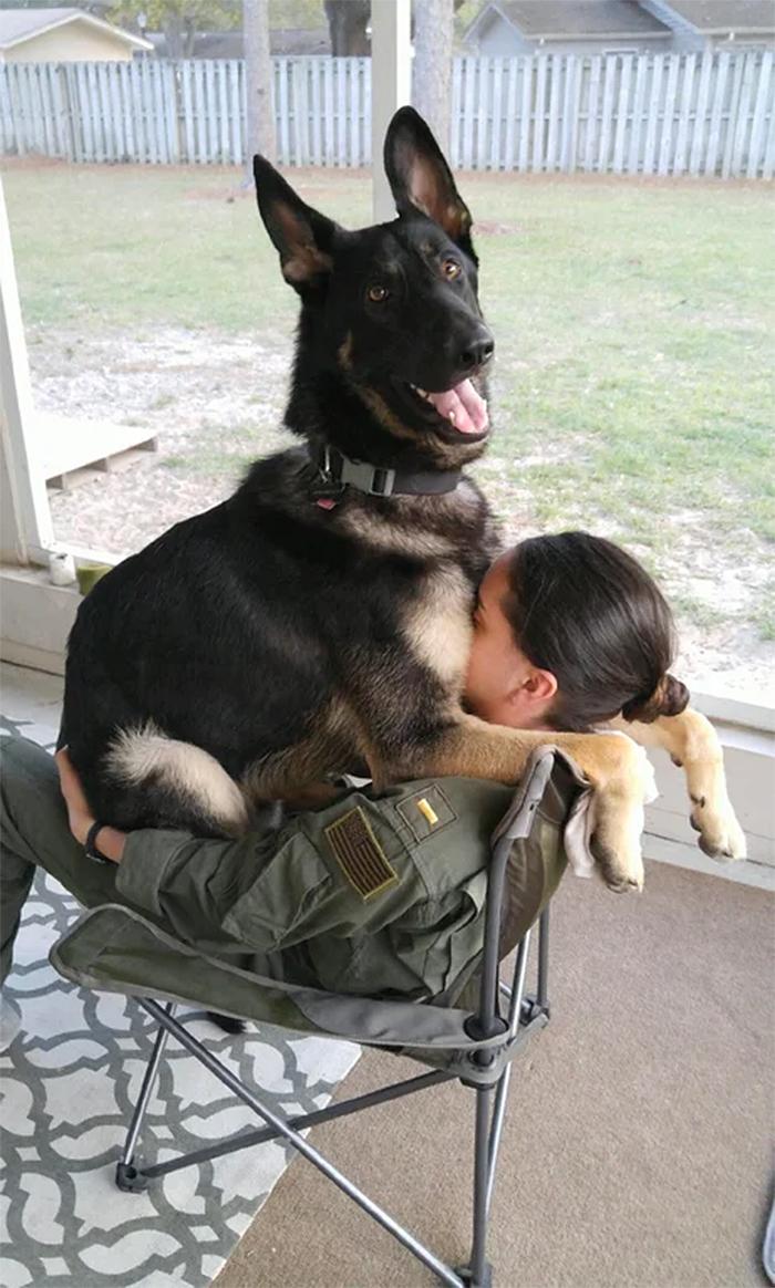german shepherd thinks he is a puppy