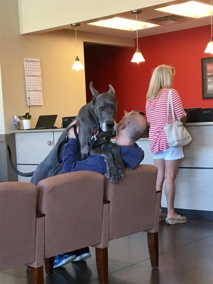 giant doggo afraid of the vet