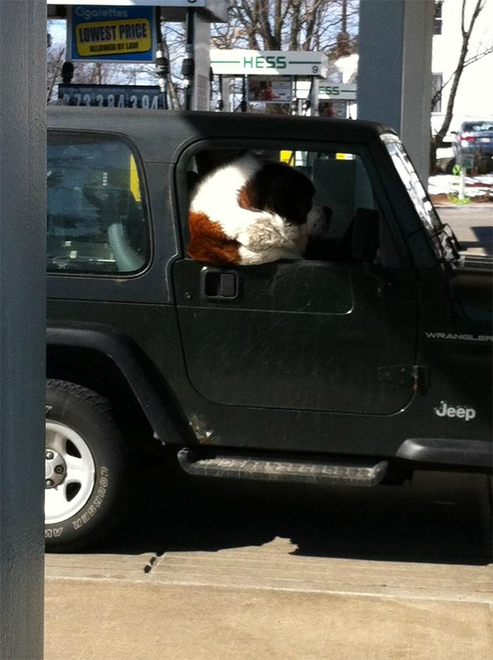 giant doggo in car