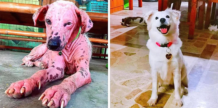 hairless rescue pup transformation