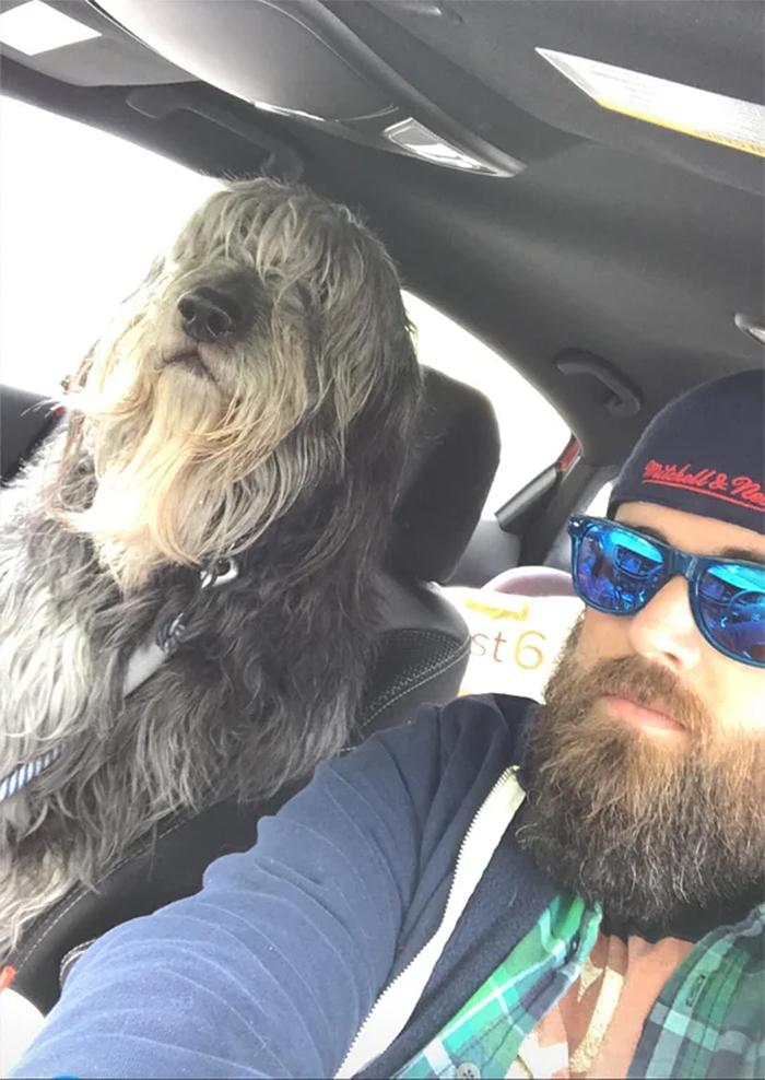 human sized big dogs