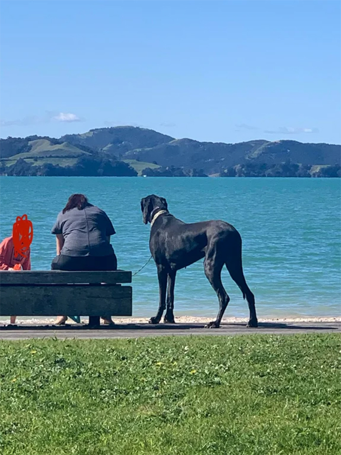 large doggo at the beach