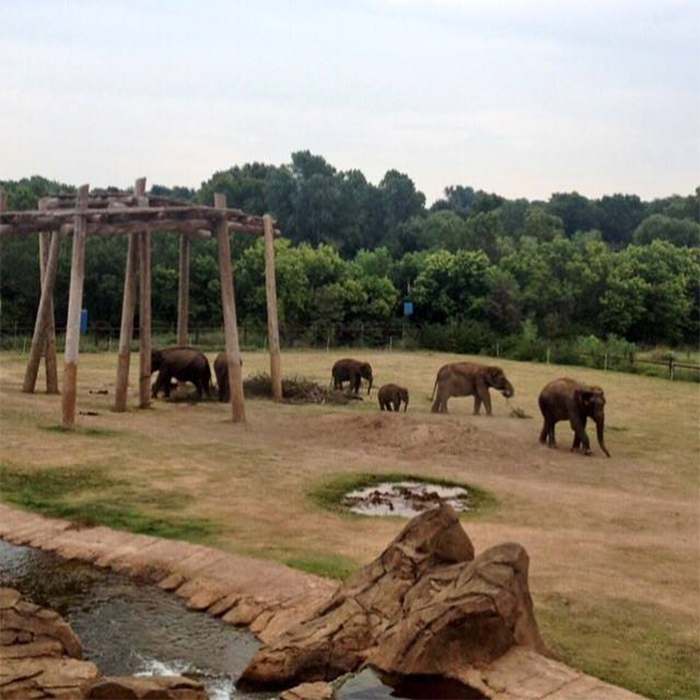 oklahoma city zoo elephants