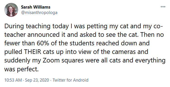 onlice class cats zoom