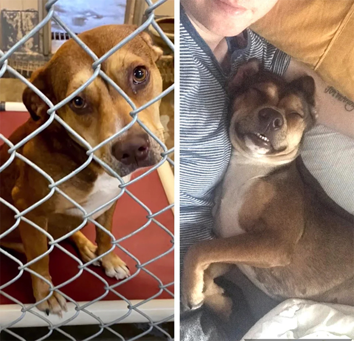 puppy adopted from kill shelter then and now