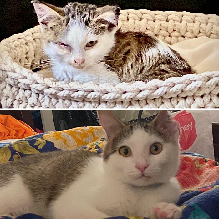 rescue cats before and after adoption