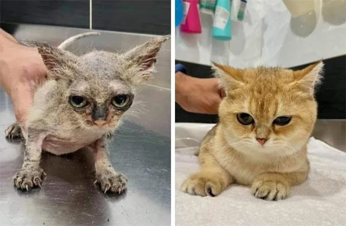 rescue kitten with ringworm then and now